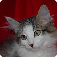 Adopt A Pet :: Precious - Longview, WA