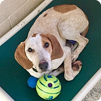Adopt A Pet :: Lightning - Greensburg, PA