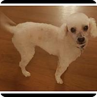 Adopt A Pet :: TRUMAN - Winchester, CA