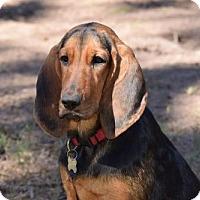 Adopt A Pet :: Lena - Orlando, FL