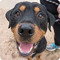 Adopt A Pet :: Maximus - Seattle, WA