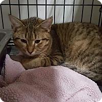 Adopt A Pet :: Zen - Virginia Beach, VA