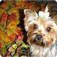 Adopt A Pet :: Serena - Mooy, AL