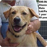 Adopt A Pet :: Chance - RESCUED! - Zanesville, OH