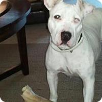 Adopt A Pet :: Pearl - Justin, TX