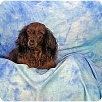 Adopt A Pet :: Jaycie - Ft. Myers, FL