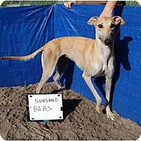 Adopt A Pet :: Babs - N. BABYLON, NY