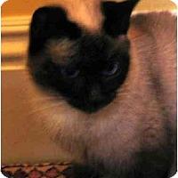 Adopt A Pet :: Dumpling - Davis, CA