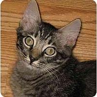 Adopt A Pet :: Homer - AUSTIN, TX