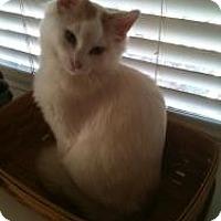 Adopt A Pet :: Aspen - Justin, TX