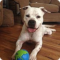 Adopt A Pet :: Bubba - Oviedo, FL