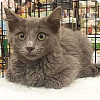 Adopt A Pet :: Sylph - Edmond, OK