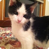 Adopt A Pet :: Fizz - Trevose, PA