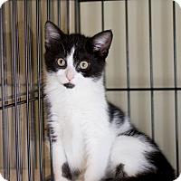 Adopt A Pet :: Jaime - Island Park, NY