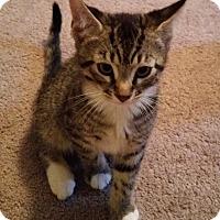 Adopt A Pet :: Jalapeno - Raritan, NJ