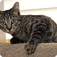 Adopt A Pet :: Gemma - Davis, CA