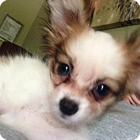 Adopt A Pet :: Flicker - Fairview Heights, IL