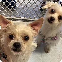Adopt A Pet :: Hansel & Gretel - La Quinta, CA