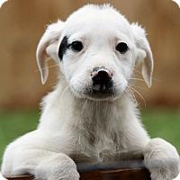 Adopt A Pet :: Elise - Windham, NH