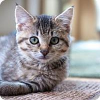 Adopt A Pet :: Noelle - Healdsburg, CA
