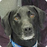 Adopt A Pet :: Jordan - Huntley, IL