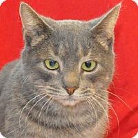 Adopt A Pet :: Virgil - Gaithersburg, MD