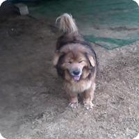Adopt A Pet :: Bama - Graceville, FL