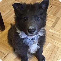 Adopt A Pet :: Nigel - Minneapolis, MN