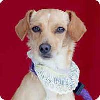 Adopt A Pet :: Olivia - San Marcos, CA