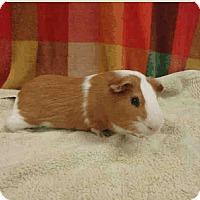 Adopt A Pet :: *Urgent* Boo - Fullerton, CA