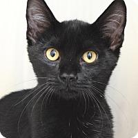 Adopt A Pet :: Hudson - Dublin, CA