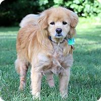 Adopt A Pet :: Leroy - Waldorf, MD