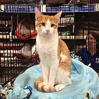 Adopt A Pet :: Eli Joe - Jenkintown, PA