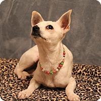 Adopt A Pet :: Solita - Yukon, OK