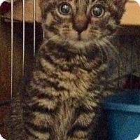 Adopt A Pet :: Arthur - Brooklyn, NY