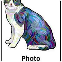 Adopt A Pet :: Snow Moon - Encinitas, CA