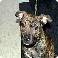 Adopt A Pet :: OSCAR - Olathe, KS