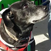 Adopt A Pet :: Wrangler - Shallotte, NC