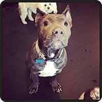 Adopt A Pet :: Hoyt - West Allis, WI