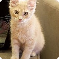 Adopt A Pet :: Harry - Chattanooga, TN