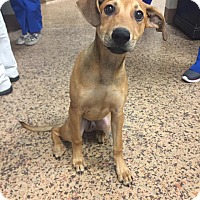 Adopt A Pet :: Sam - Virginia Beach, VA