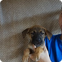 Adopt A Pet :: Tulip - Oviedo, FL