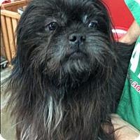 Adopt A Pet :: Chase - Centerville, GA