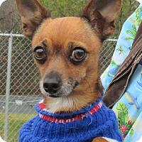 Adopt A Pet :: Moxy - Reeds Spring, MO