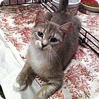 Adopt A Pet :: Asia - Harriman, NY, NY