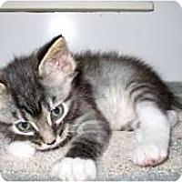 Adopt A Pet :: Douglas - Shelton, WA