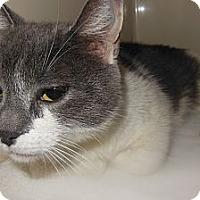 Adopt A Pet :: Missy - N. Berwick, ME