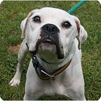 Adopt A Pet :: Georgia - Okatie, SC