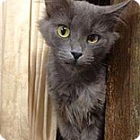 Adopt A Pet :: Jenny - St. Louis, MO