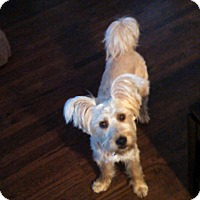 Adopt A Pet :: Farnsworth - Chicago, IL